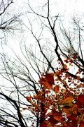 ultime foglie