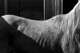 cavallo strisce sbarre _1