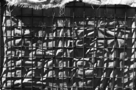 2673 muro tif