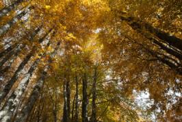Foliage sul Terminillo