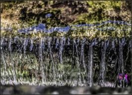 DSCF7165_Orto Botanico_5x7_Livia