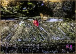 DSCF8604_Orto Botanico_5x7_Livia