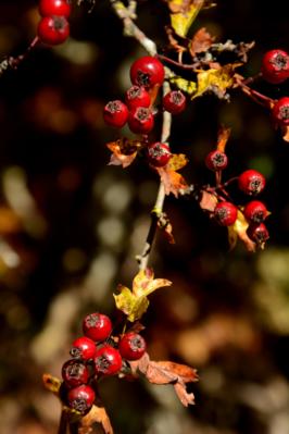 autunno13