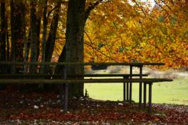 autunno14