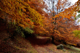 autunno17