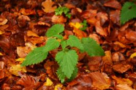 autunno18
