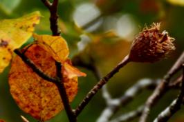 autunno9 copia