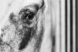 cavallo occhio sbarre