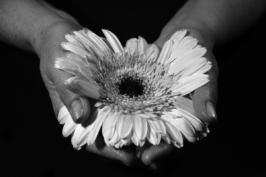 fiori13