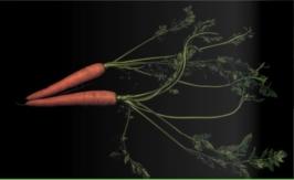 Photo & vegetables - Manfredi De Negri